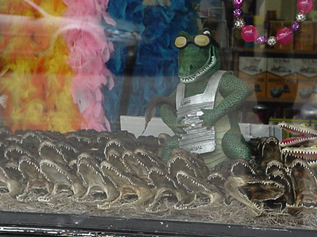 "alligators.jpg: Window shopping in New Orleans. You can't find these ""treasures"" in downtown Buzzards Bay."